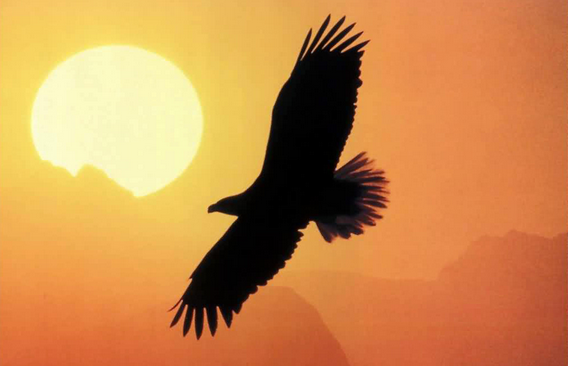 Picture of eagle flying across sun lit sky